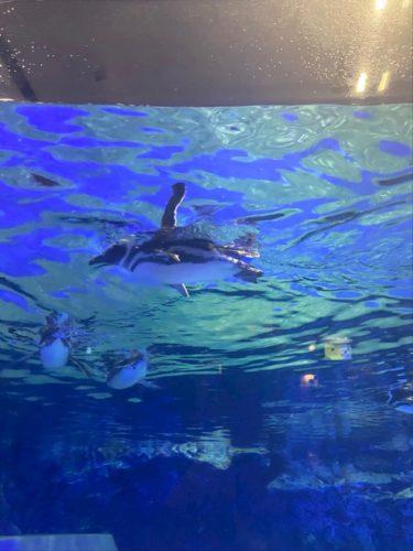 exx45g9bu3pAmFbwp6c l 375x500 - 水族館!!