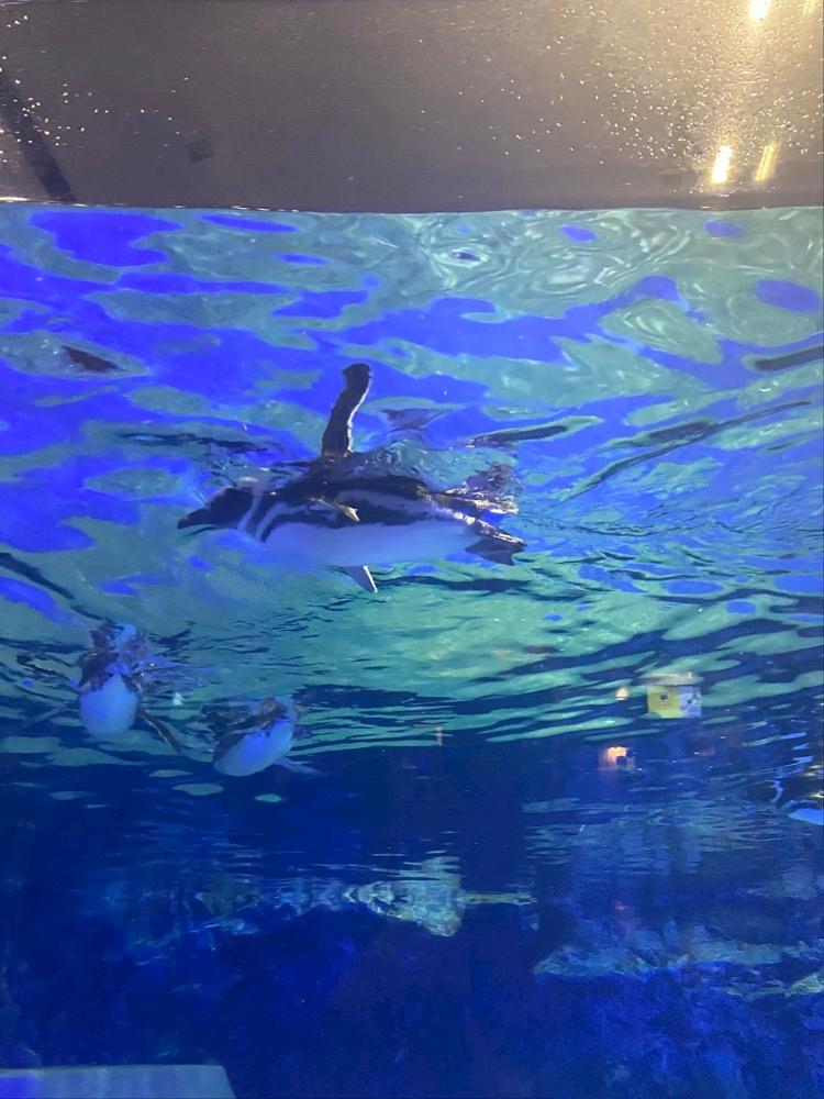 exx45g9bu3pAmFbwp6c l - 水族館!!